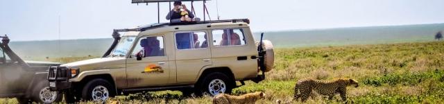 Cheetah-Serengeti National Park 1
