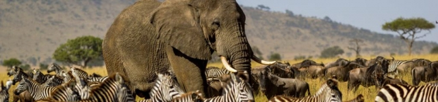 great migration serengeti masai mara