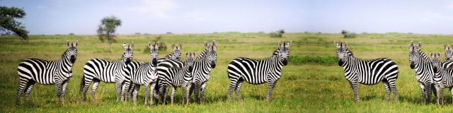 katavi-national-park-zebras