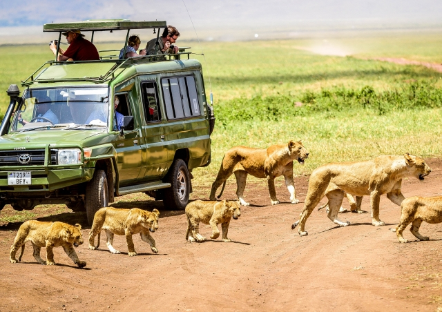 quest horizone on safari