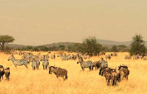 6 Days Tarangire Serengeti Ngorongoro And Lake Manyara Safari Lodge
