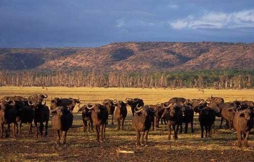 7 Days Tarangire Serengeti Ngorongoro And Lake Manyara Safari Camping