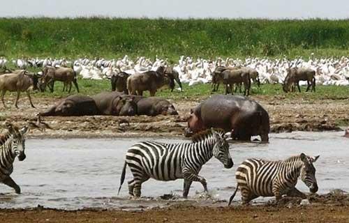7 Days Tarangire Serengeti Ngorongoro And Lake Manyara Safari Lodge