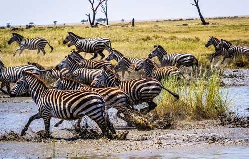 8 Days Serengeti Migration Safari Luxury Camping December To March
