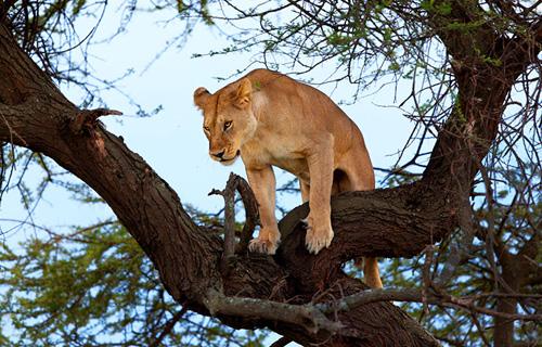 Day Trip To Lake Manyara National Park