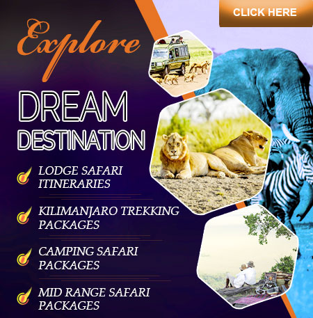 Safari Itinerary