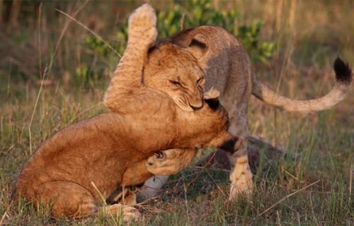 Tanzania Midrange Safari