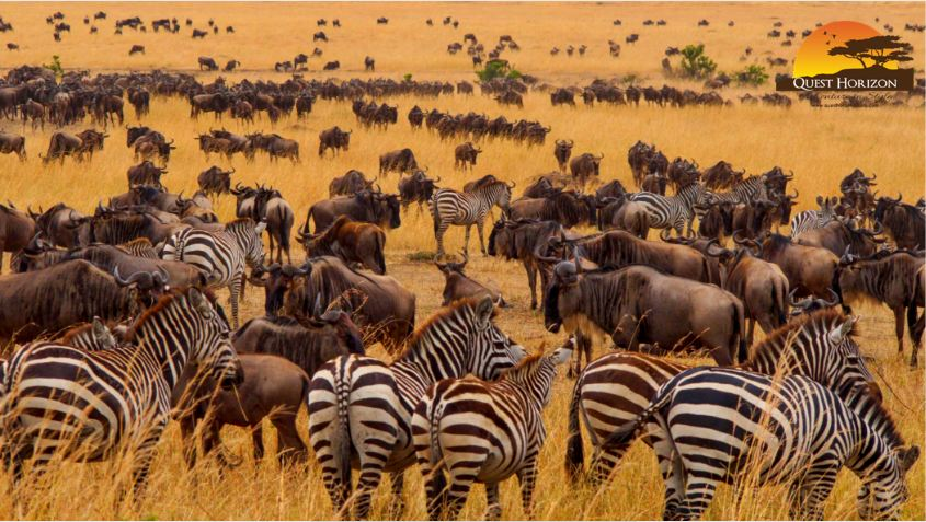 It's Not Just About Wildebeest