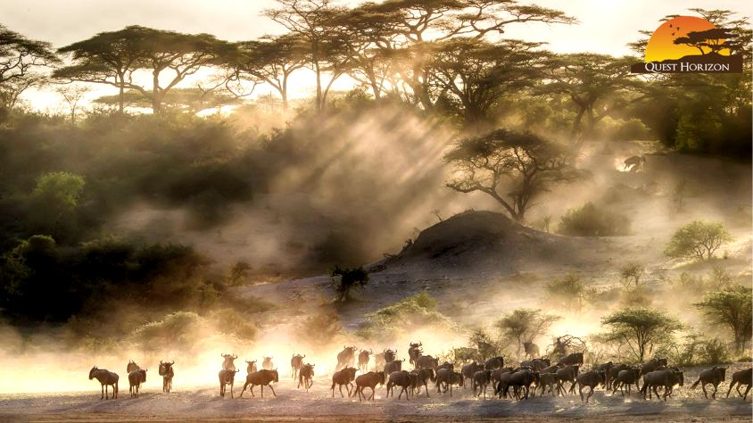 No Serengeti Without Migration