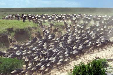 best-time-to-visit-tanzania