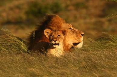 tanzania-safari-faqs