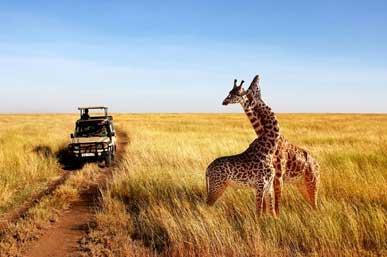 tanzania-safari-for-first-timer